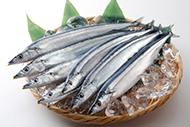 イチオシ食材「北海道産 生さんま」